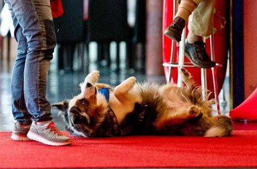 Mit Spaß lernen Hunde am schnellsten