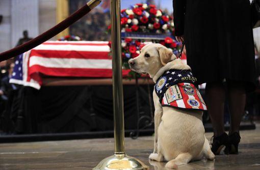 """Die Labradorhündin war Bushs """"Service Dog"""", ... Foto: AP"""