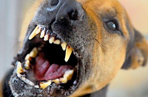 Wie man sich Hunden gegenüber verhalten sollte