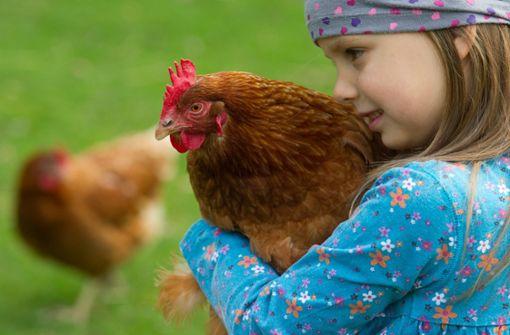 Grün-Schwarz will Label für Tierwohl