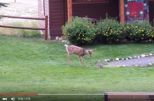 Genau wie Bambi und Klopfer