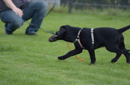 Der Deutschen Liebe zu Hunden ist für Menschen anderer Kulturkreise oft unverständlich. Foto: dpa