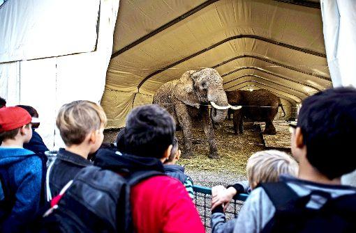 Circus Krone: Tiere nicht gestresst
