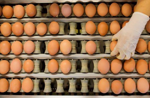 Salmonellen im Ei – Was Verbraucher jetzt wissen müssen