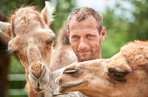 Warum fünf Kamele auf der Alb grasen