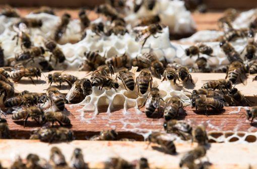 Dieb wirft Bienenstock um - 40.000 Bienen sterben