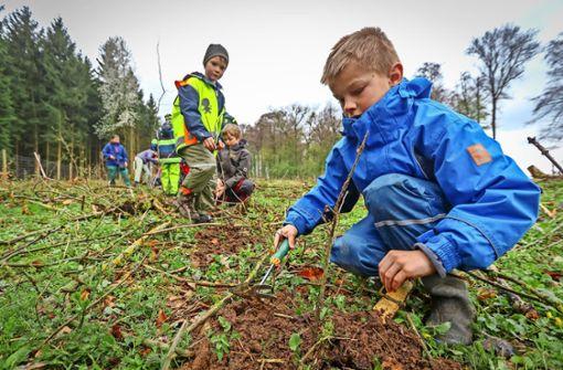 Nabu-Kinder pflanzen frische Eichen im Seewald