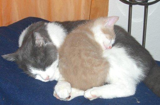 So schön schlafen Katzen