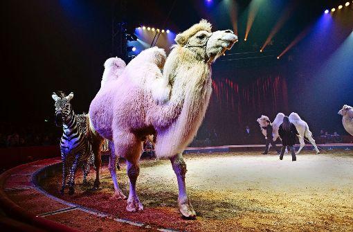 Stuttgart hält am Wildtierverbot für Zirkusse fest