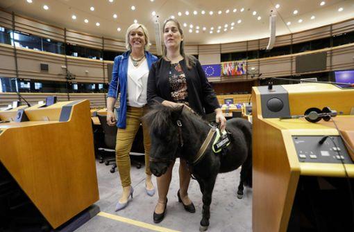 Blindenpferd Dinky zu Gast im Europaparlament