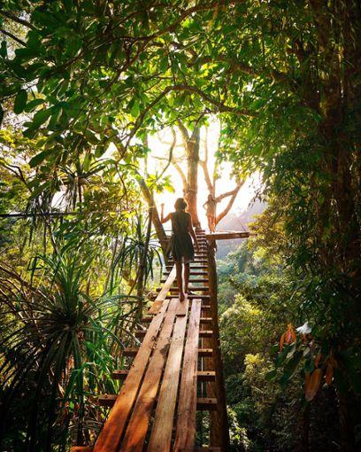 Noch besser ist der Ausblick auf das Valley of the Giants vom erhabenen Tree Top Walk.  Foto: Pixabay