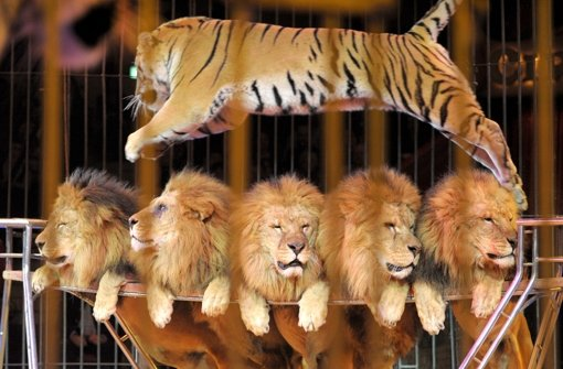Exotische Tiere gehören nicht in den Zirkus
