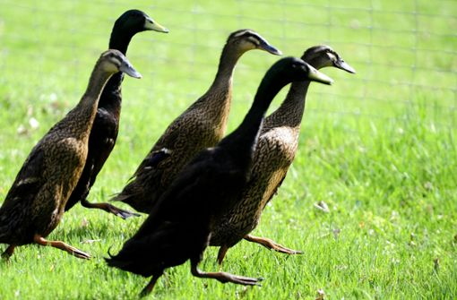 Senior bremst für Enten und stürzt schwer