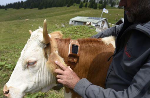 Kuhglocken – der Sound der Alpen