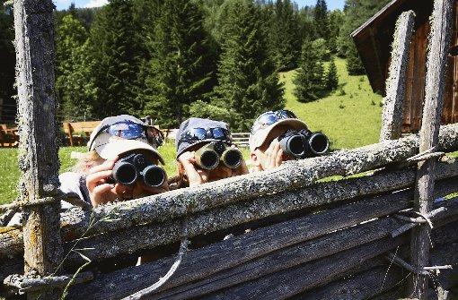 Wer entdeckt das Nest des Steinadlers? Foto: Schneeweiss (2), Schöpfer (3)