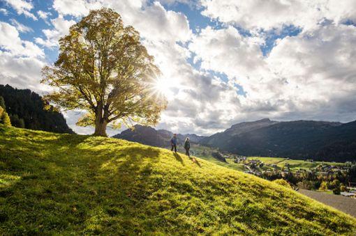 Oberhalb von Riezlern leuchten die Bergwiesen im Herbst golden, die Bergspitzen sind weiß überpudert  Foto: Kleinwalsertal Tourismus eGen