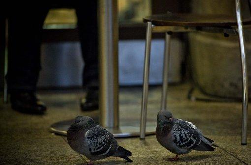Im Stuttgarter Hauptbahnhof rücken rund 300 Tauben Fahrgästen und Imbissen immer dichter auf die Pelle Foto: Lichtgut/Max Kovalenko
