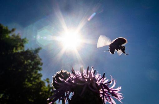 Ein Wildbienenprojekt zählt zu den Aktivitäten der Stadt. Foto: dpa