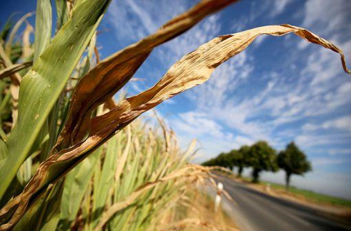 Wie Bauern jetzt mit der Dürre umgehen
