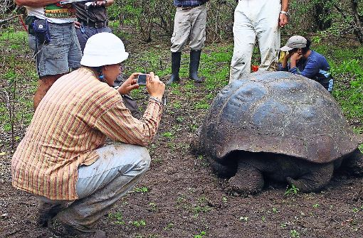 Schildkröten in misslicher Lage