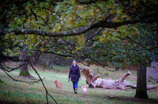 Im Stuttgarter Eichenhain lässt es sich wunderbar verweilen – auch im Herbst. Foto: Lg/Achim Zweygarth