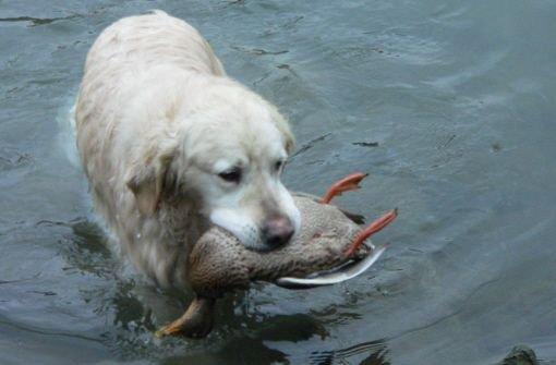 Jagdhunde sollen sanfter lernen