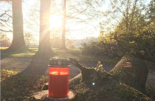 Am Montag haben Bürger Grablichter auf gefällte Bäume gestellt. Foto: Caroline Holowiecki