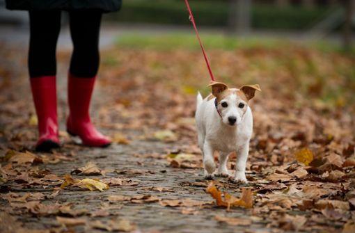 Hund läuft auf die S-Bahn-Gleise und verursacht Schnellbremsung