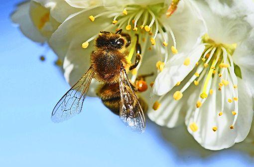 Bienen leiden unter der Kälte