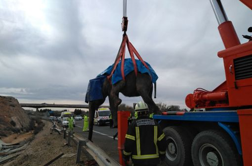 Transporter kippt um – Elefanten blockieren Straße