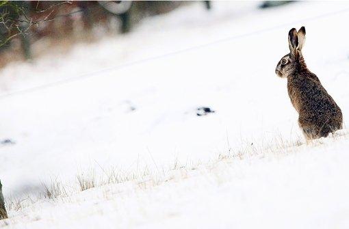 Feuchtkaltes Wetter bekommt den Langohren gar nicht gut. Foto: dpa-Zentralbild