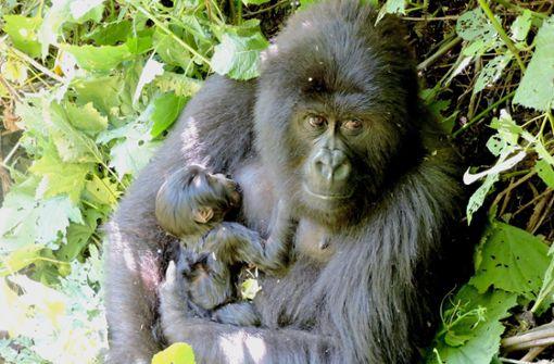 Diese Tiere sind nicht mehr vom Aussterben bedroht