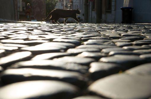 500 verstümmelte Tiere – Jagd nach dem Katzen-Mörder