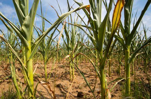Das müssen Sie zur Dürre in Deutschland wissen