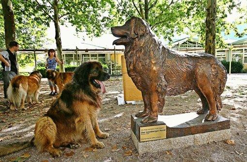 Nur äußerst selten hat der Leonberger Hund auf dem Bürgerplatz Besuch. Foto: factum/Archiv