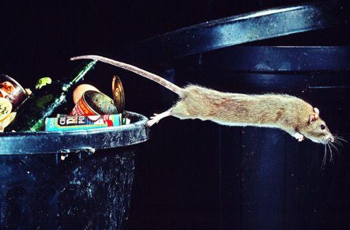 Nachbarn fürchten Rattenplage im Wohnort