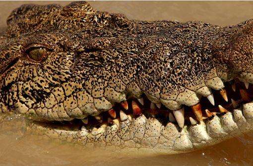 Mob schlachtet 292 Krokodile ab