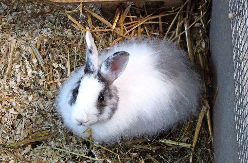 Erst putzig, dann lästig: Kaninchen werden oft in Filderstadt abgegeben. Foto: Malte Klein
