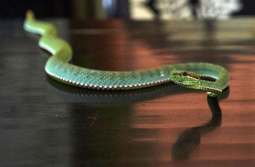 Mann tötet Schlange mit bloßen Händen