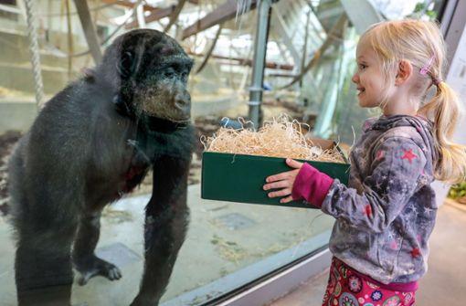 Bescherung im Affenhaus