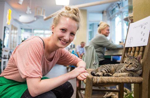 Kaffeeklatsch und Streicheleinheiten: Erstes Hamburger Katzencafé eröffnet