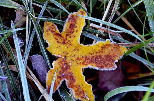 Ende der Frostgefahr in Sicht