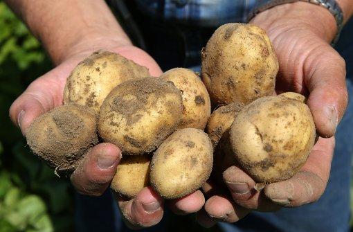 """Ob eine Kartoffel """"Franziska"""" oder """"Linda"""" heißen darf, wird nach strengen Regularien entschieden. Foto: dpa-Zentralbild"""